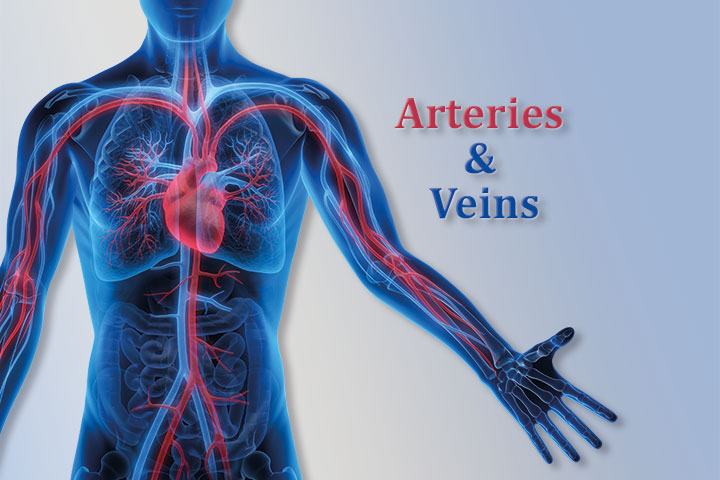 Header-Arteries-&-Veins-mobil_Arterial_Venous_diseases_ Arteriosclerosis_aneurysms_embolism_thrombosis_spider_veins,_varicose_veins_variceal_leg_ulcers