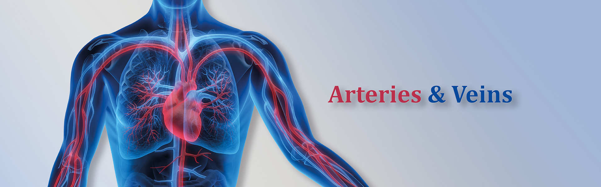 Header_Arteries_Veins_Arterial_Venous_diseases_ Arteriosclerosis_aneurysms_embolism_thrombosis_spider_veins,_varicose_veins_variceal_leg_ulcers