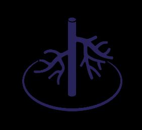 Header_Arterien_Venen_Arteriosklerose_Aneurysmen_Embolien_Thrombosen_Besenreiser_Krampfadern_Varizen_offene Beine_Stentsystem_Crossing Katheter_Lasersystem